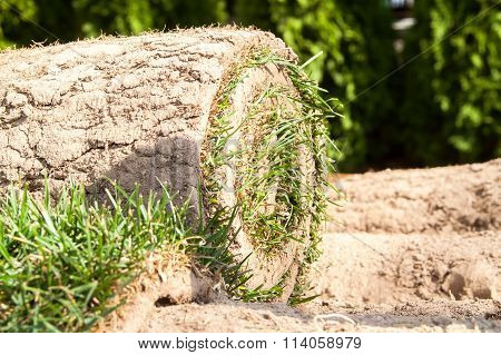 Green Grass Twisted Into A Roll For Packing