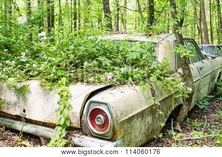 Overgrown Ford