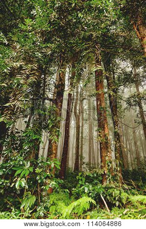 Evergreen Jungle Forest After Rain. Natural Misty Background. Bali, Indonesia.