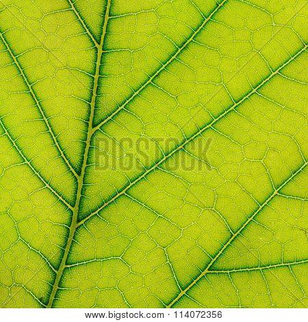 fresh leaf of plant close up