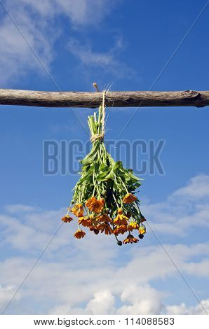 Bunch Of Calendula Hanged On A Wooden Stick To Dry