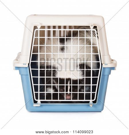 skunk in a pet crate