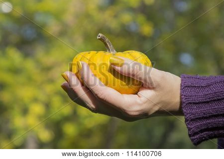 Female hand holding yellow gourd outdoors