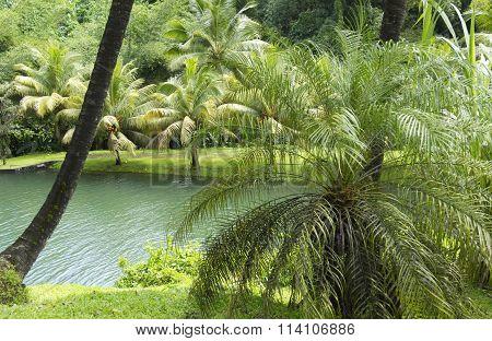Landscape Of Macouba In Martinique
