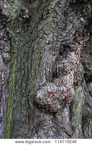 Old Tree Bark Close Up