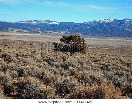 Sagebrush and Mountains