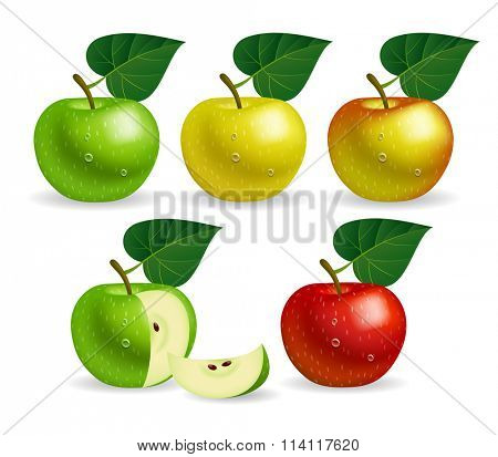 Apples of different colors. Vector illustration