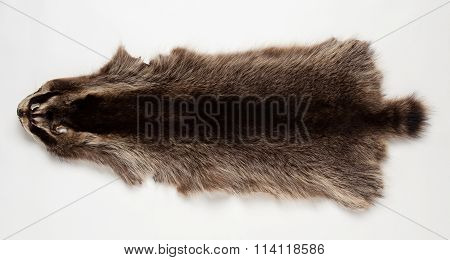 Skin Beaver