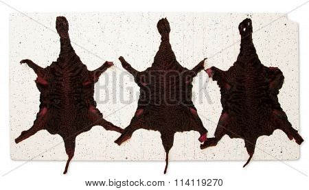Karakul Skins Of Red On A White Background
