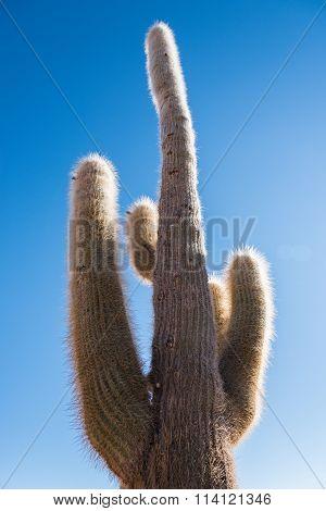 Cactus Against Blue Sky