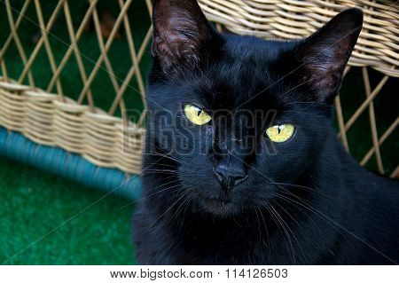 Black Cat Looking Up