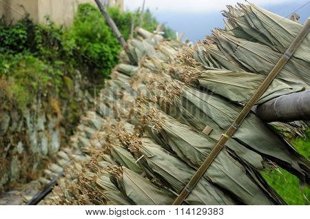 Corn Leaves Drying