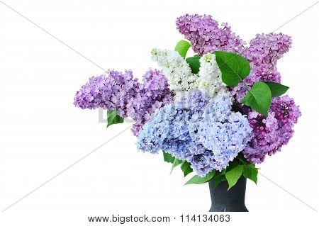 Lilac Flower Bouquet Several Colors In Vase Isolated - Syringa Vulgaris
