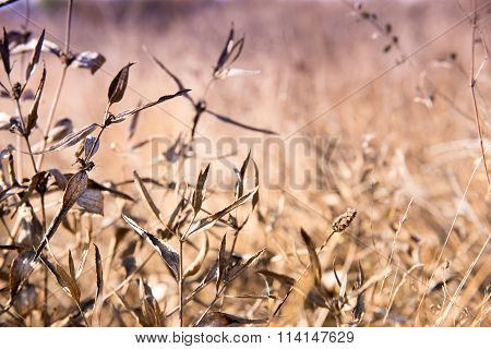 Dry plants on the field autumn