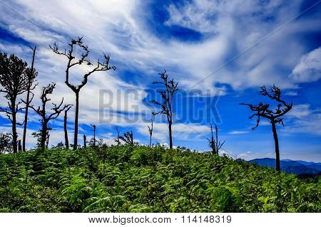 trees with blue sky and cloud