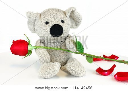 cute koala with red rose