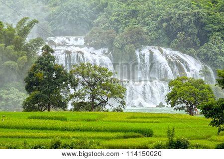 The rice paddies Ban Gioc waterfall