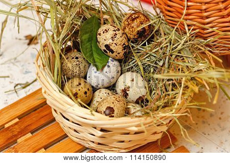 Quail Eggs In Basket. Protein.