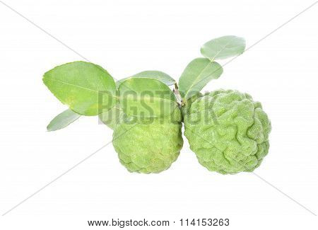 Kaffir Lime With Leaf Isolate On White Background