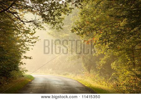 Country road in a misty autumn forest