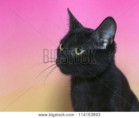Black kitten with green eyes on pink and yellow background