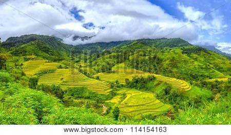 Terraced fields on the hills of the village of Ha Giang, Vietnam