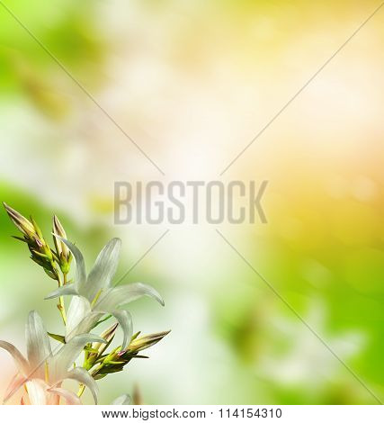 Floral Background Of Delicate Flowers Bluebells