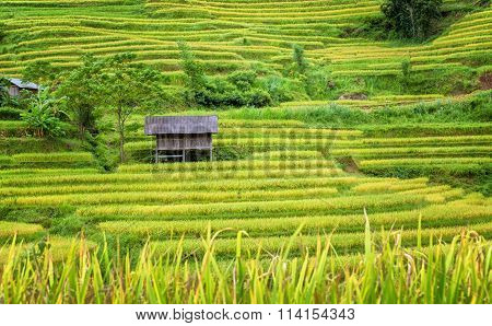 Stilt houses on the terraced rice fields