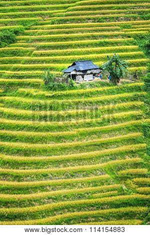 Little House on the terraced rice fields