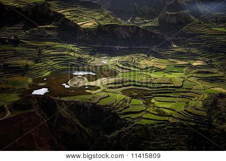 Terraces In Colca Canyon, Peru