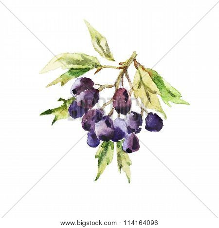 Vector watercolor autumn berries