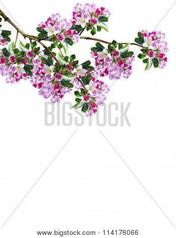 Branch Of Plum Blossoms
