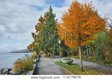 autumn tree in embankment of Montereux, canton of Vaud