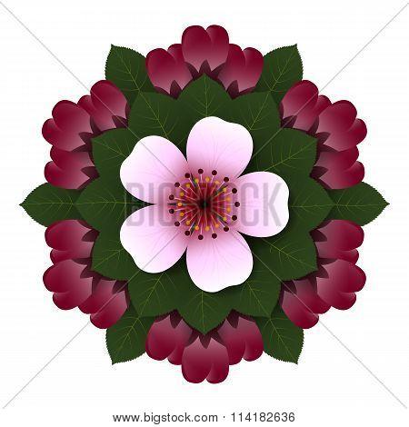 Floral Rosette Pink Cherry Flower