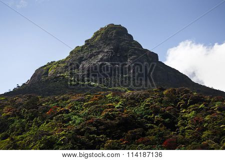 Mountain of Adam's Peak (local name is Sri Pada, 2243m (7359ft)) with fluffy cloud and colorfull forest around