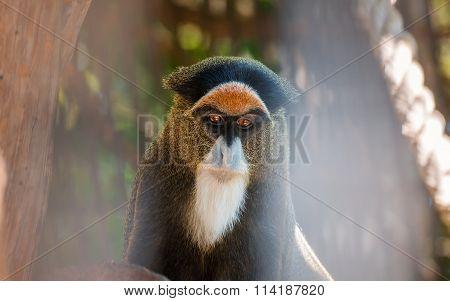 Monkey Portrait In Zoo