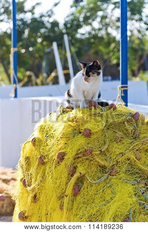 Cat And Fishing Net