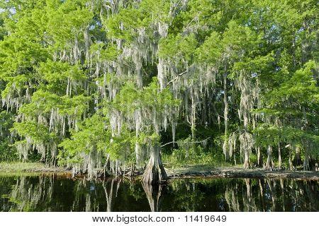 Florida Swamp Landscape