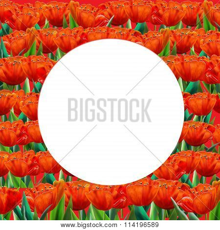 Template Tulip Abstract Background