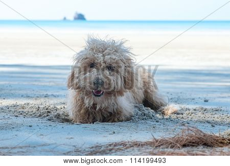 Dog Dig Holes In The Sand