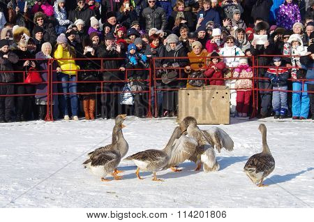 Goose Fights On Shrovetide - The Celebration And Folk Festival, Suzdal