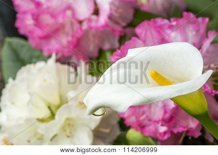 Calla lily and rhododendron