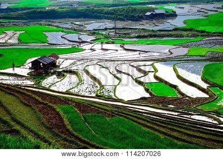 Rice fields on terraced of Mu Cang Chai, YenBai, Vietnam.