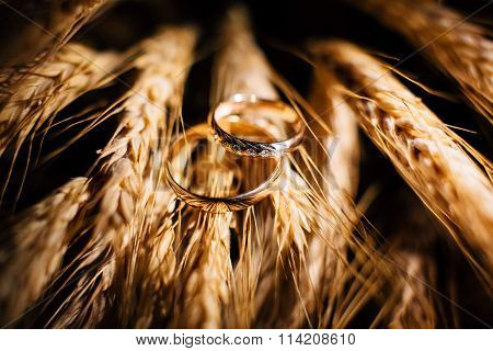 Beautiful wedding rings close up shot on the wheat ears