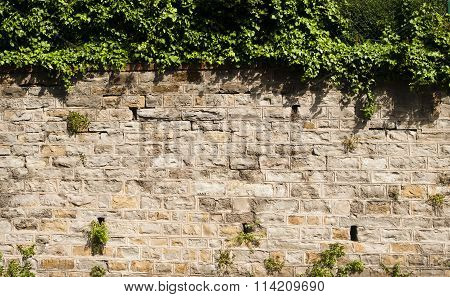 Old Stone Wall With Vegetation