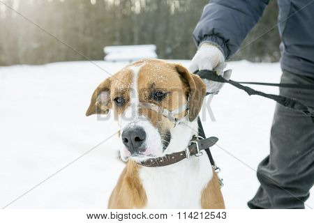 nice dog on a leash in the snow