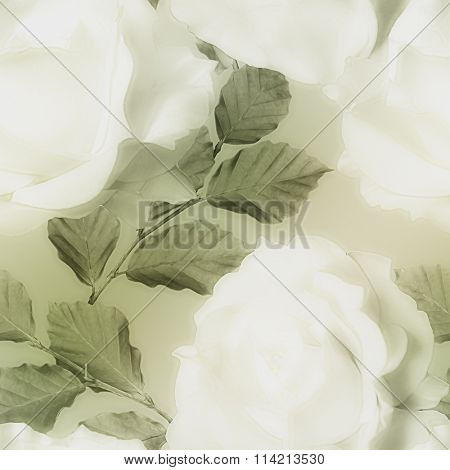 art vintage monochrome watercolor blurred floral seamless pattern with white roses on light green background
