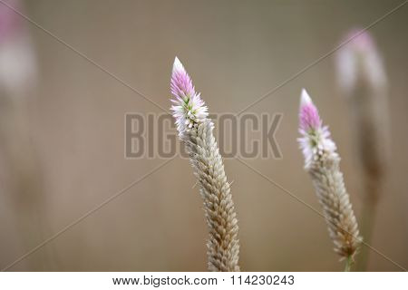 Close up shot of wild flowers in India