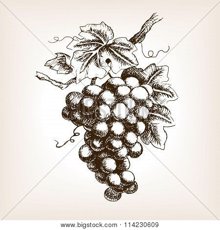 Bunch of grapes hand drawn sketch style vector