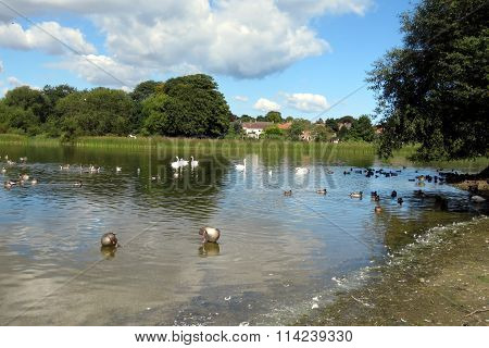 Rural Scene at Hornsea Mere, UK